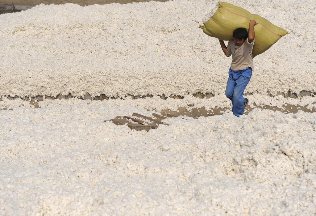 「新疆棉」最近被指與新疆強逼勞動問題有關。(路透社)