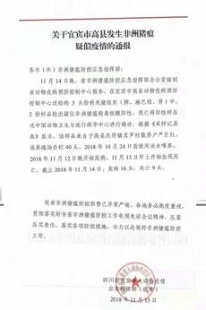 2018年11月15日,四川官方檔案披露顯示,該養殖戶使用泔水餵豬可能導致感染。這也意味著非洲豬瘟病毒早已流入當地民眾的餐桌。(媒體人提供)